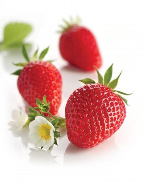 Gariguette-Erdbeeren