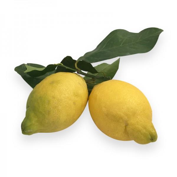 Amalfi Zitrone