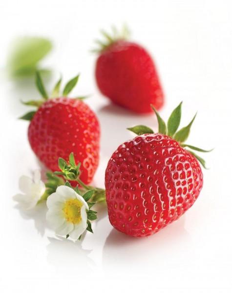 """Erdbeere """"Gariguette """""""