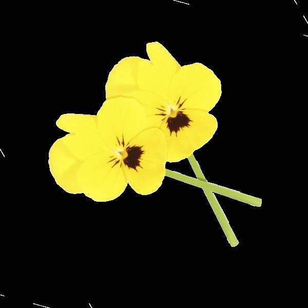 """Cornabria Blossom (essbare Blüte) """"Koppert Cress """""""